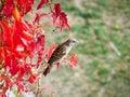 Beautiful sparrow Royalty Free Stock Photo