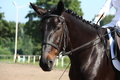 Beautiful sport horse portrait during dressage test Stock Photo