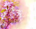 Beautiful spring floral background colorful image Royalty Free Stock Photos