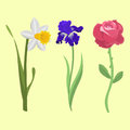 Beautiful spring flower botanical bloom watercolor painting summer branch petal decoration bouquet nature design vector
