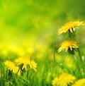 Krásny jar kvety