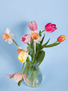 Beautiful spring flowers on a blue background Stock Photography