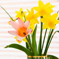 Beautiful spring flowers daffodils and a pink lily colourful flower arrangement Royalty Free Stock Photos