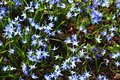Beautiful spring flowers in a flower bed in different colors Royalty Free Stock Photo
