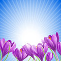 Beautiful spring flowers on sunny sky background Royalty Free Stock Photo