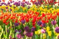 Beautiful spring flowers in thailand Stock Photos