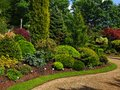 Beautiful spring garden with conifiers Royalty Free Stock Image