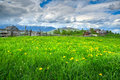 Beautiful spring landscape with field of yellow dandelion flowers Royalty Free Stock Photo