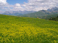 Beautiful spring meadow Stock Image