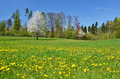 Beautiful spring meadow eastern switzerland Royalty Free Stock Image