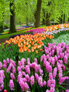 Beautiful spring park Stock Images