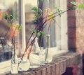Beautiful spring tree branches in glass bottles on window. Home Royalty Free Stock Photo
