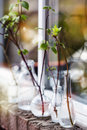 Beautiful spring tree branches in glass bottles on window Royalty Free Stock Photo
