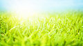 Beautiful springtime landscape sunny day fresh green grass blue sky rural field spring nature Stock Photos