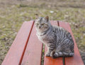 Beautiful striped cat sitting on a wooden bench