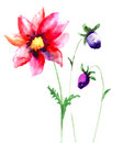 Beautiful sumer flowers watercolor painting Royalty Free Stock Images