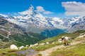 Beautiful summer Alpine mountains Stock Photos