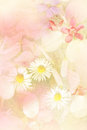 Beautiful summer flowers artistic background in cream pink and yellow Royalty Free Stock Images