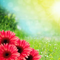 Beautiful summer flowers background with copy space Stock Photos