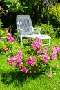 Beautiful summer garden with blooming pink roses and a white deckchair. Royalty Free Stock Photo