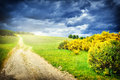 Beautiful summer landscape with country road Royalty Free Stock Photo