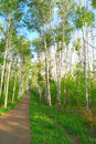 Beautiful summer landscape with footpath in birch grove Stock Images