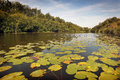 Beautiful summer landscape on a river with water lilies Stock Images