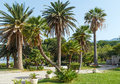 A beautiful summer park with palm trees morning view near villa milocher montenegro budva Royalty Free Stock Photography