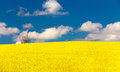 Beautiful summer rural landscape with rape field and blue sky spring yellow rape field in countryside Royalty Free Stock Photos