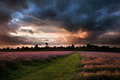 Beautiful Summer sunset over lavender field Stock Images