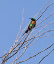 Beautiful Sunbird on a branch Stock Photo