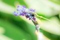 Beautiful Sunbird Royalty Free Stock Photo