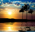 Beautiful sunet with palm tree Royalty Free Stock Photos