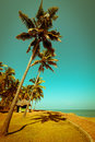 Beautiful sunny day at tropical beach with palm trees and bungalow ocean landscape in vintage style india Royalty Free Stock Photography