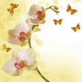 Beautiful sunny orchid and butterfly Royalty Free Stock Image