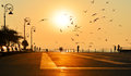Beautiful sunrise with silhouettes of people and birds at the black sea Stock Photography