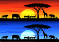 Beautiful sunset background on Africa wildlife Stock Photography