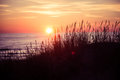 Beautiful sunset behind dune grass Royalty Free Stock Photo