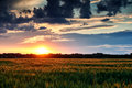 Beautiful Sunset In Field, Sum...