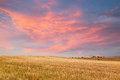 Beautiful sunset over golden field alentejo portugal Stock Image
