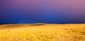 Beautiful Sunset over Golden Field Royalty Free Stock Photo