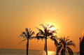 Beautiful sunset over palm trees on the background of the ocean in Thailand Royalty Free Stock Photo