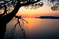 Beautiful sunset over the sea and picturesque tree Royalty Free Stock Photo