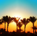 Beautiful sunset with palm trees orange and blue Stock Photography