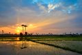 Beautiful sunset on rice field countryside Royalty Free Stock Images