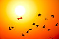 Beautiful sunset and silhouettes of birds flying Stock Image