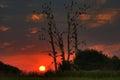 Krásný západ slunce spací ptactvo
