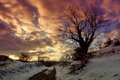 Beautiful sunset with early winter landscape. Lonely tree. Winter background Royalty Free Stock Photo