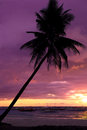 Beautiful sunset at tropical beach with palm trees colorful on coconut Stock Photo