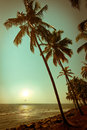 Beautiful sunset at tropical beach with palm trees ocean landscape in vintage style india Stock Photos